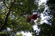 A szonda a fa tetején